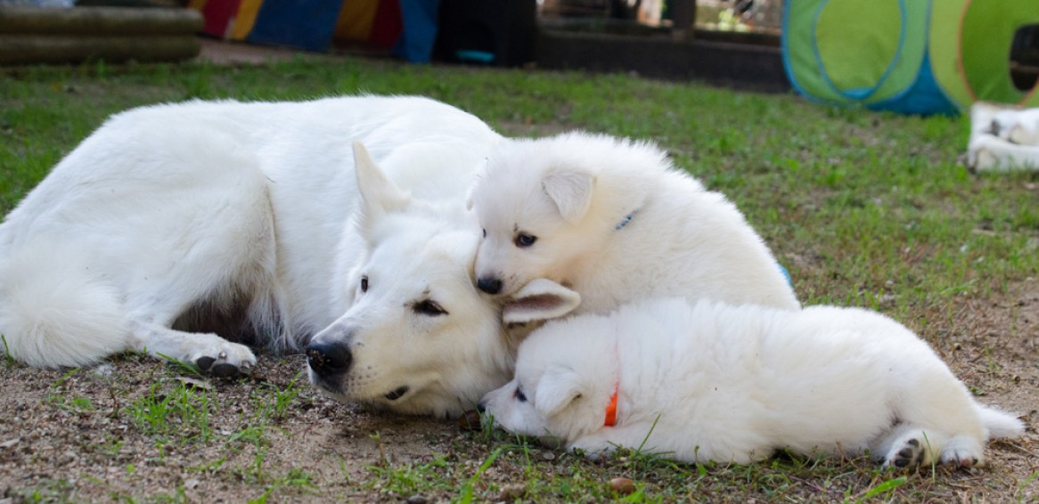 Mama Cresta con dos de sus cachorros.