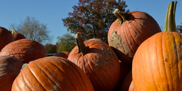 "13th Annual ""Pumpkin Palooza"" To Be Held On Saturday, October 27th"