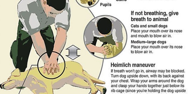 Infographic: Saving Your Dog's Life With CPR