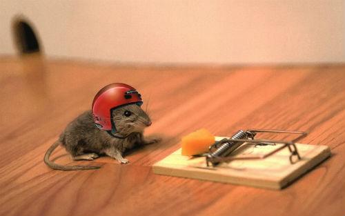 La trappola per topi - Storiella Zen