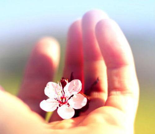 La meditazione del fiore