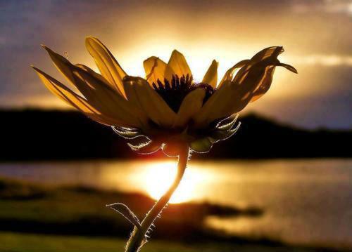 Meditazione per dissolvere i problemi