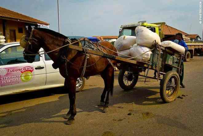 Horse and wagon are a common sight on the Transamazônica