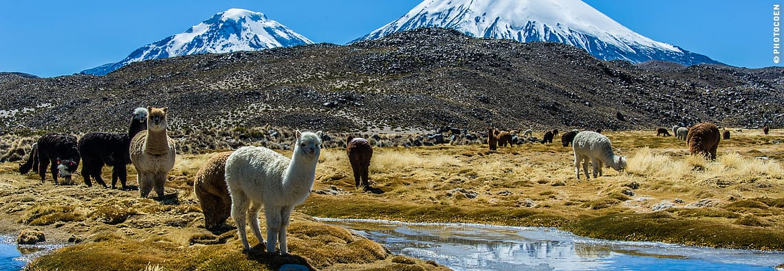 Altiplano Chile (©photocoen)