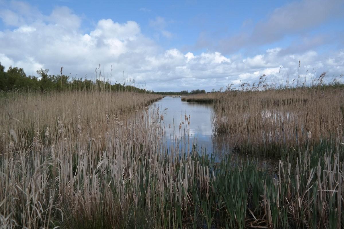 Umgeben von Wasser im Nationalpark De Biesbosch