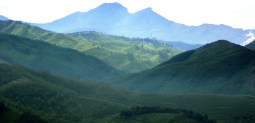 An ecological green curtain