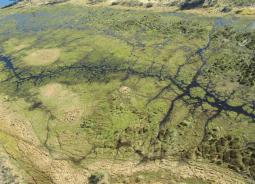 Animals and elements in symbiosis: the Okavango Delta