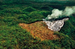 Agriculture and deforestation