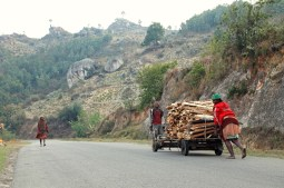 Firewood supply