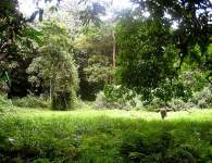 Pepper farm in Southeast Sulawesi