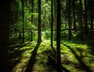 csm_Forest_landscape_in_Germany_03_070cb15eb0