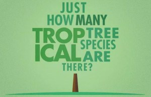 Tree species INFOGRAPHICS