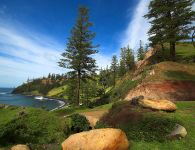 "Norfolk-Island-Pines"" by thinboyfatter - originally posted to Flickr as Norfolk Island. Licensed under CC BY 2.0 via Wikimedia Commons."