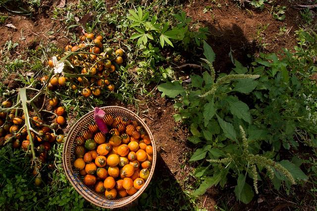 Agroforestry in Lubuk Beringin village, Indonesia. Photo: Tri Saputro/CIFOR