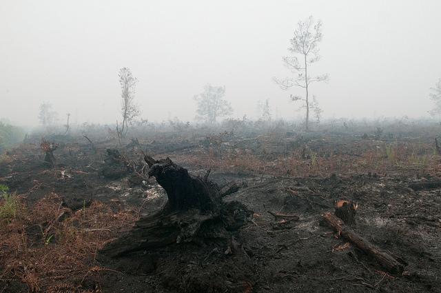 An expanse of burnt peat in Palangka Raya, Central Kalimantan. Photo: Aulia Erlangga/ CIFOR