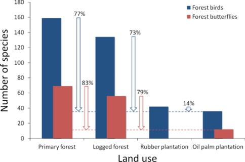 Oil palm plantations in peninsular Malaysia hold significantly fewer bird and butterfly species compared to primary forests in the same region. Source: Koh & Wilcove 2008.