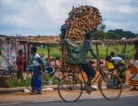 Man transporting firewood along the 50km road to Lilongwe, Malawi. IFPRI / Mitchell Maher.