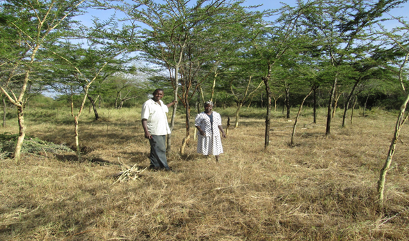 Jonathan and FMNR extension on his farm, after harvesting grass.