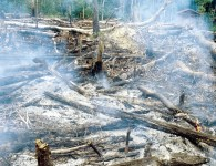 Major development banks are funding logging, mining and infrastructure projects that are having enormous impacts on nature. Here, forests are being razed along a newly constructed road in central Amazonia. William Laurance, Author provided
