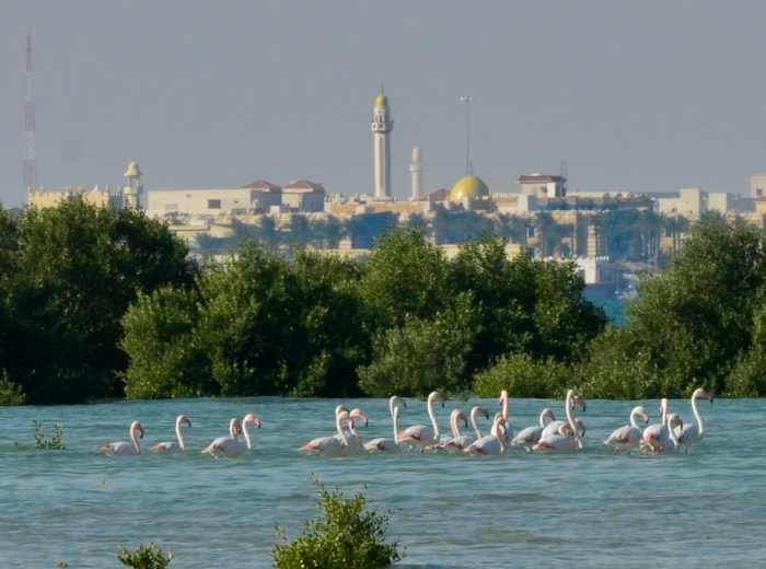 Mangroves Doha