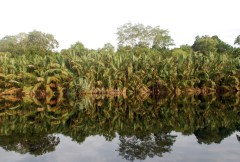 The limits to growth…of oil palm