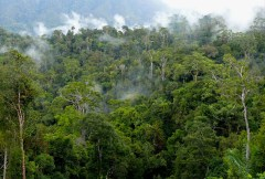 Delving into drivers of deforestation