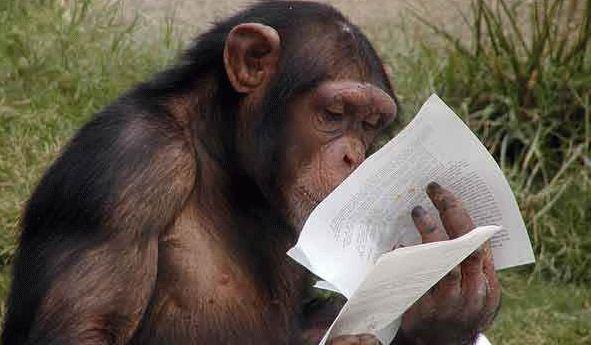 Foto di La Scimmia mentre studia