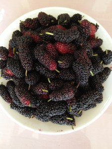 mulberry-fruit