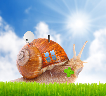 The snail with his mobil home on the road. Happy holidays concept.