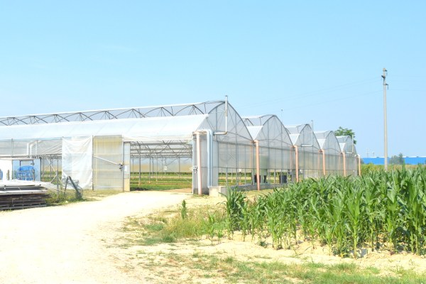 More of the Barduca greenhouses