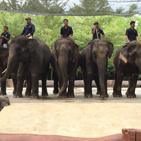 elephants tinggly