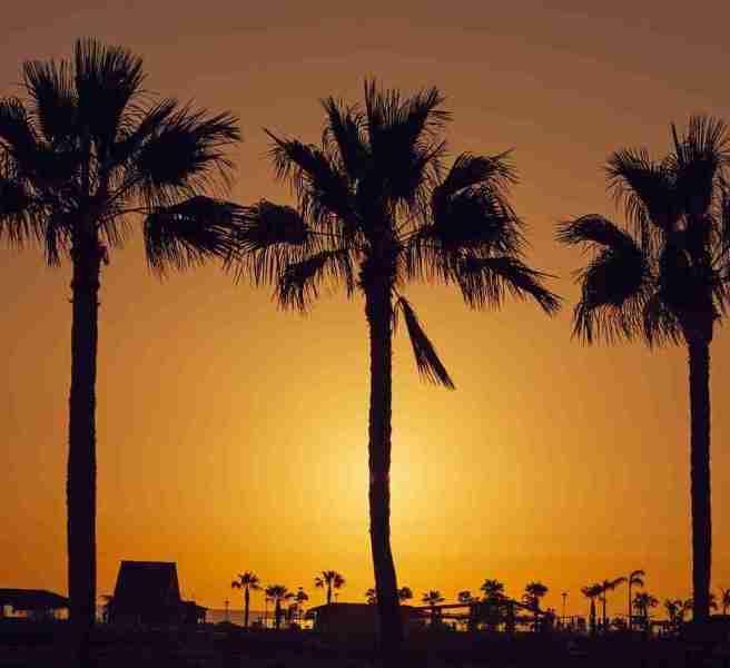 palm trees gran canaria