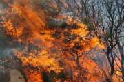 Φωτιά σε δύσβατη δασική έκταση στη Λάρισα