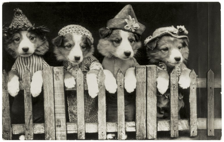 funny-vintage-dog-photography-costume