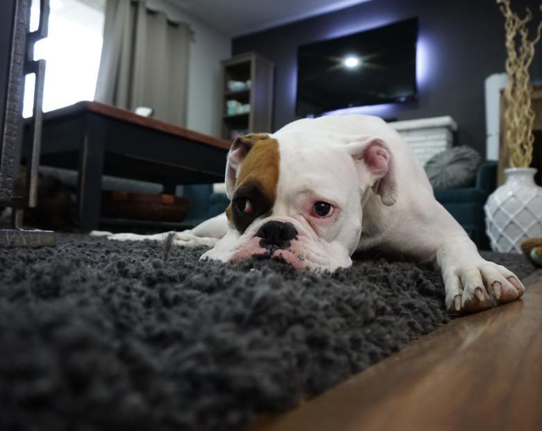 adorable-animal-canine-164446