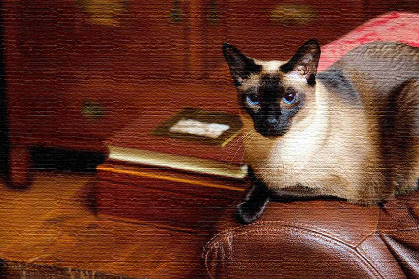 The Late-Blooming Writer and The Cat Who Could Read Backwards