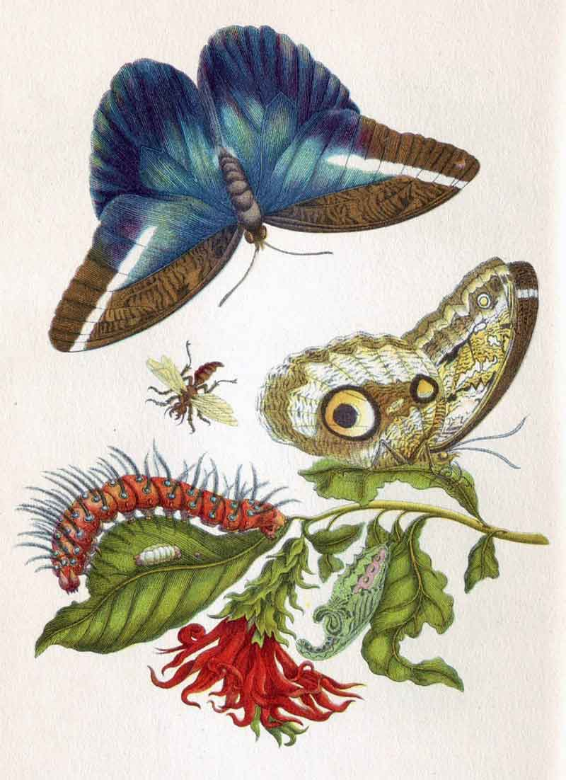 Maria Sibylla Merian: How a 17th Century Late Bloomer Became the World's First Ecologist at LaterBloomer.com