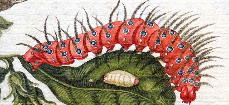 Maria Sibylla Merian: How a 17th Century Late Bloomer Became the World's First Ecologist