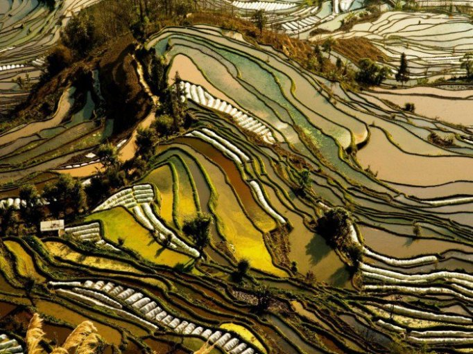 La nature incroyable Yuanyang.jpg?zoom=1