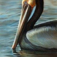 Brown Pelican Watercolor