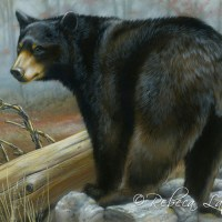Maryland Black Bear Conservation Stamp