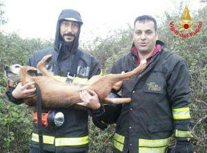 cane-salvato-vigili-fuoco-latina