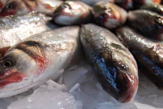 Terracina, sequestrate quasi 2 tonnellate di pesce mal conservato