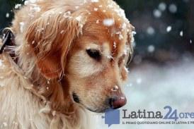 Freddo e neve in arrivo, i 10 consigli per proteggere i propri animali