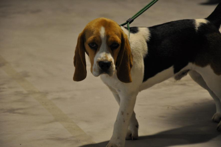 concorso-bellezza-cani-latina-3