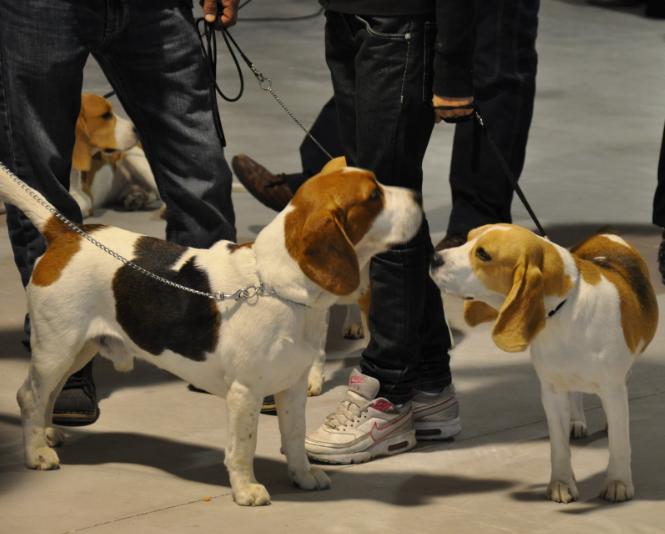 concorso-bellezza-cani-latina-4