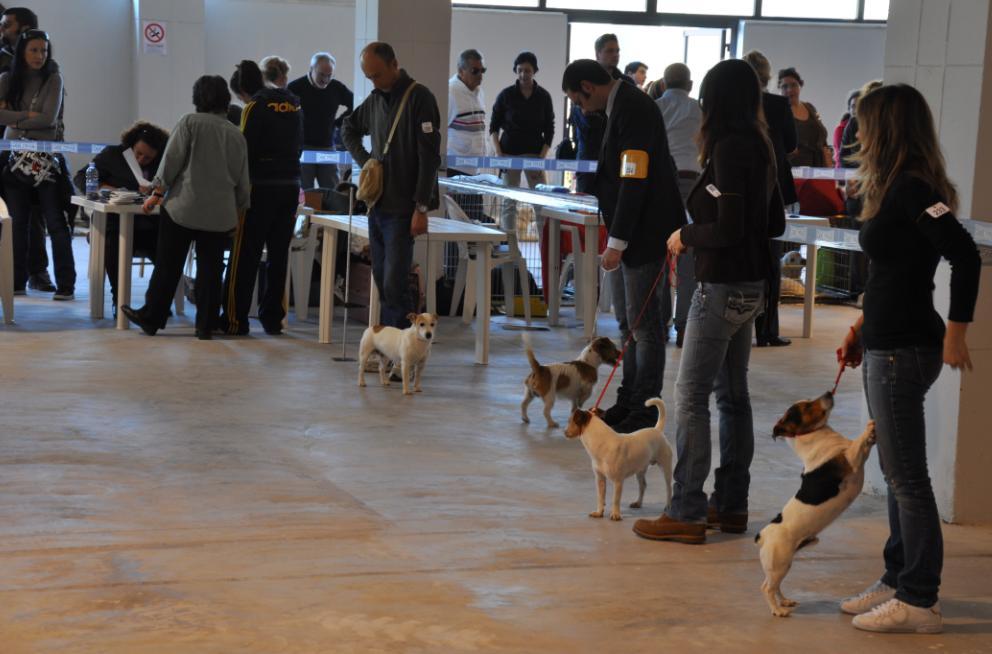 concorso-bellezza-cani-latina-5