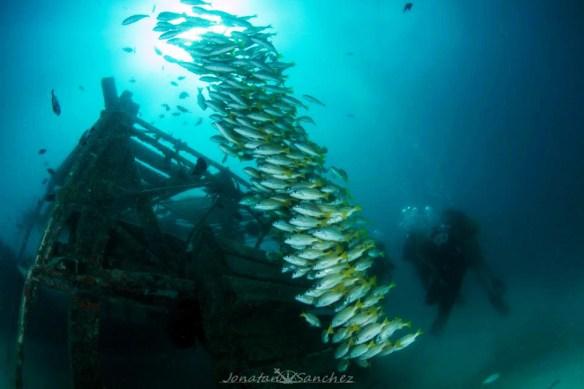 yellowtail trevally shoal, Malaysian Borneo diving