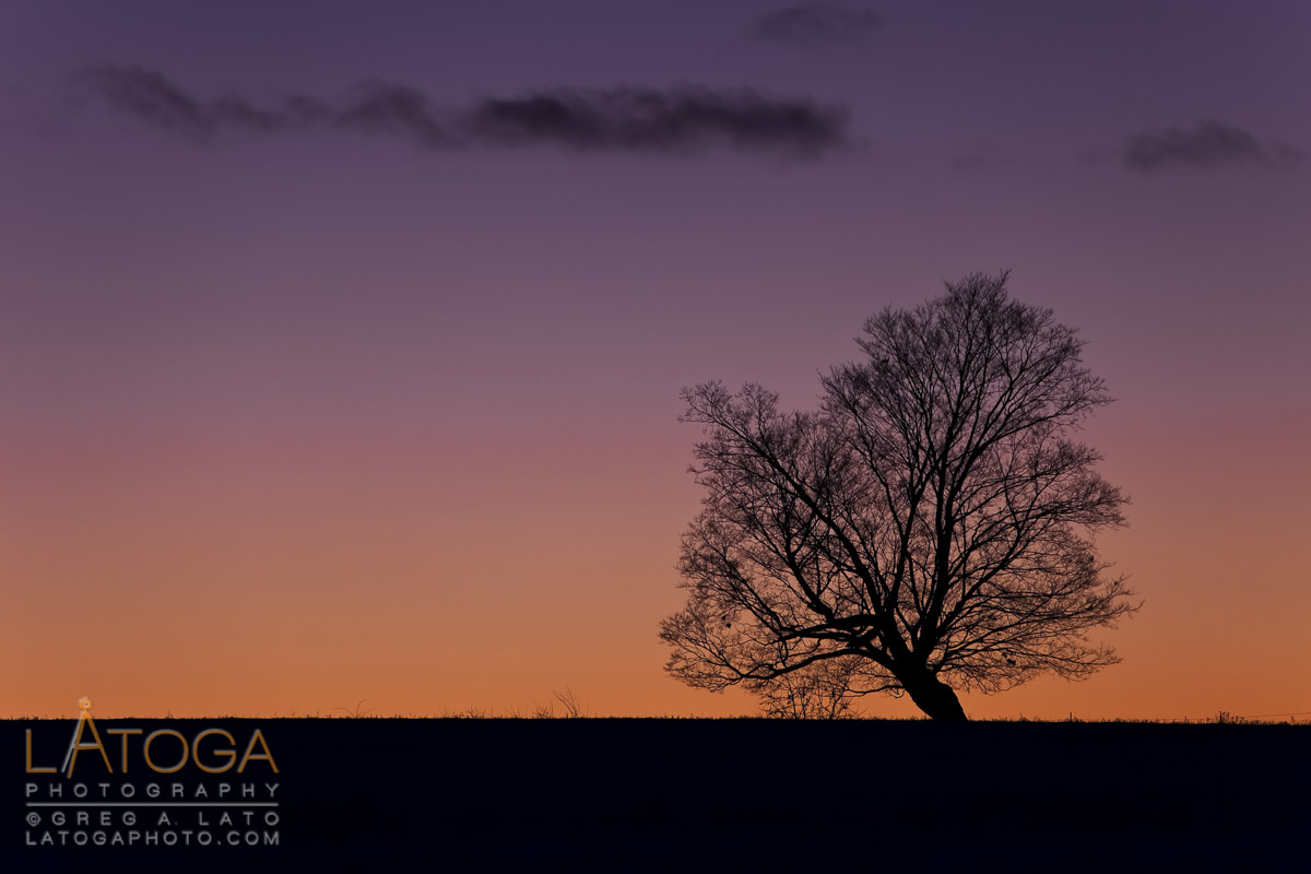 Silhouette of a single oak tree during a Wisconsin winter sunset.