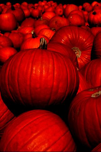 PumpkinsAfterLevels